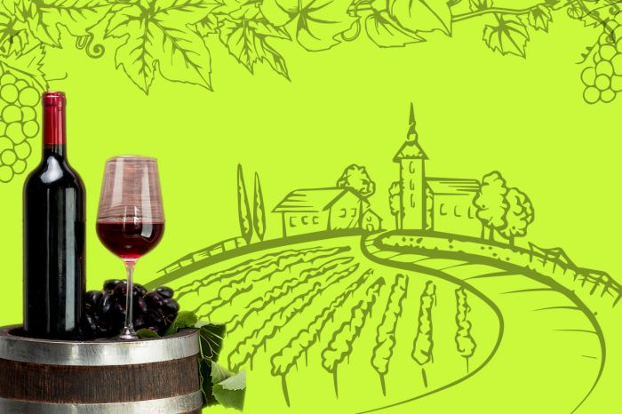 Photo for: 7 Organic & Sustainable wineries to visit